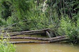 L'orfèvre des cours d'eau se révèle